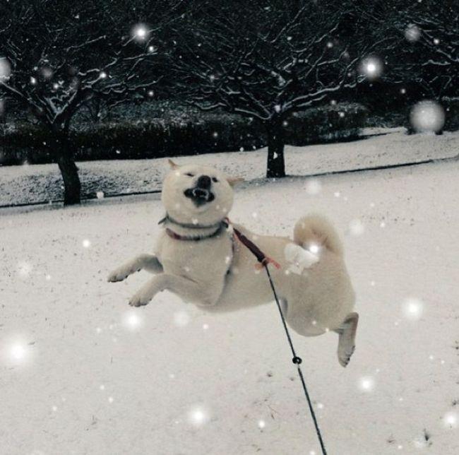 Собаки-улыбаки (60 фото)