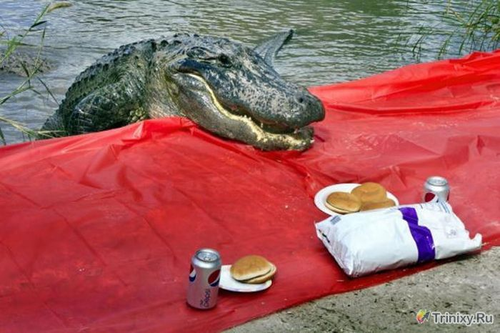 Худшее место для пикника (4 фото)