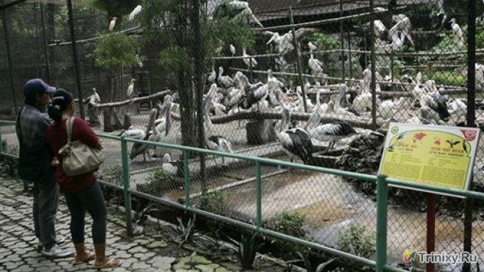 Издевательство над животными в зоопарке Сурабая (10 фото)