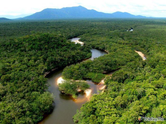 Фотоэкскурсия по нетронутым лесам Амазонки (36 фото)