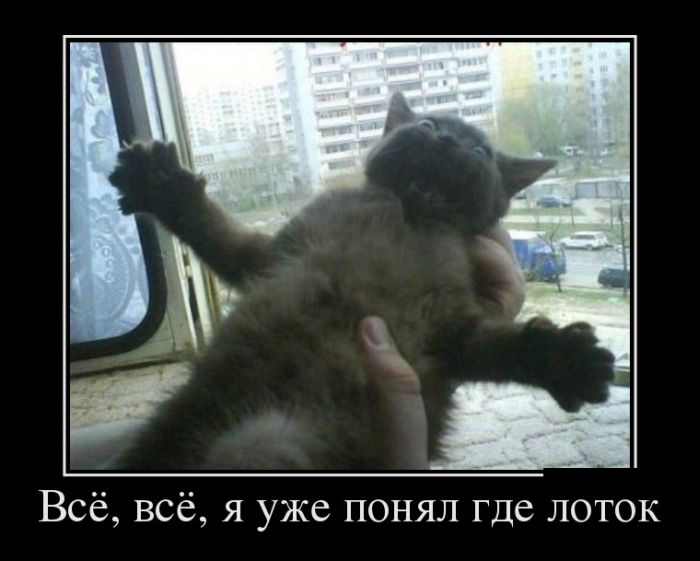 http://cdn.trinixy.ru/pics5/20130704/demotivatory_10.jpg
