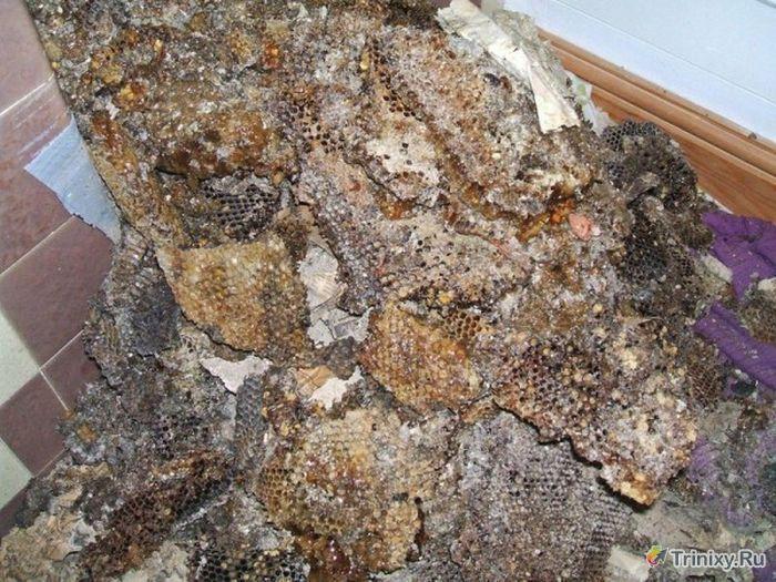 Камин с сюрпризом (4 фото)