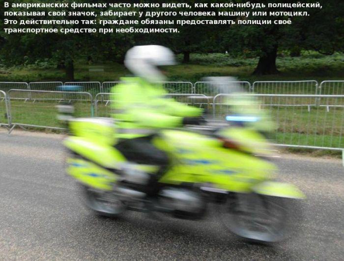 Познавательные факты об американской полиции (10 фото)