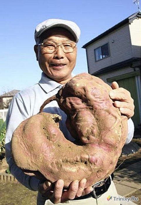 Продукты в окрестностях Фукусимы (35 фото)