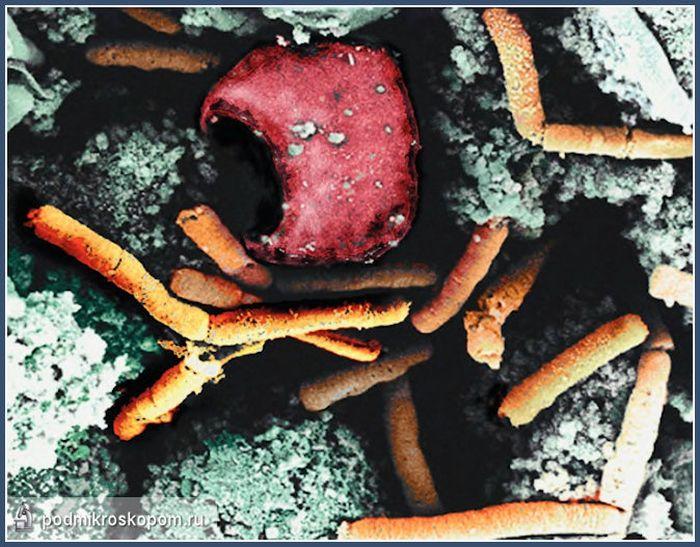 Удивительные снимки под микроскопом (27 фото)