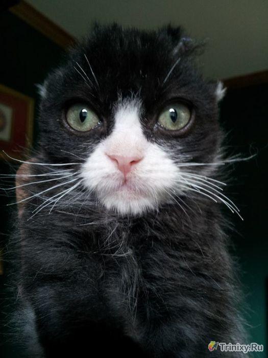 Спасение несчастного котенка (9 фото)
