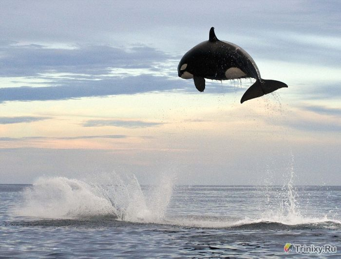 В погоне за дельфином (5 фото)