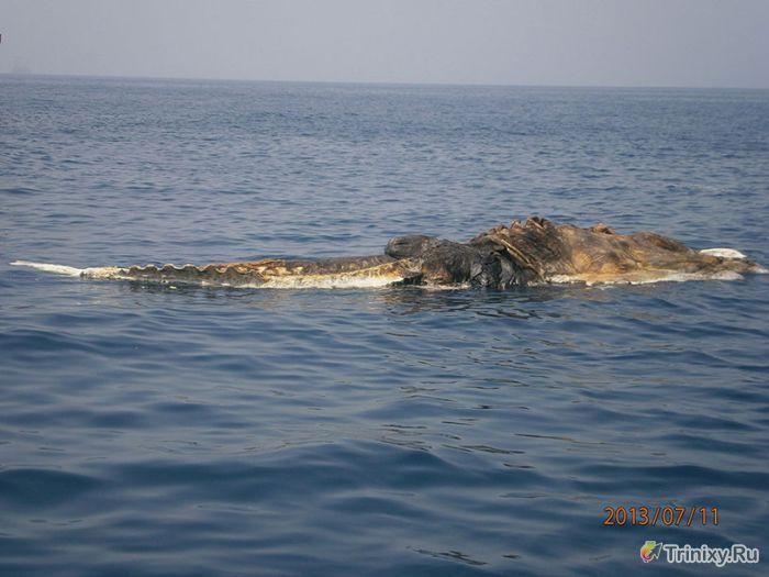 Странное существо с океанских глубин (4 фото)