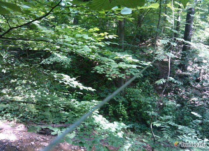 """""""Ловушка"""" для велосипедистов в лесу (5 фото)"""