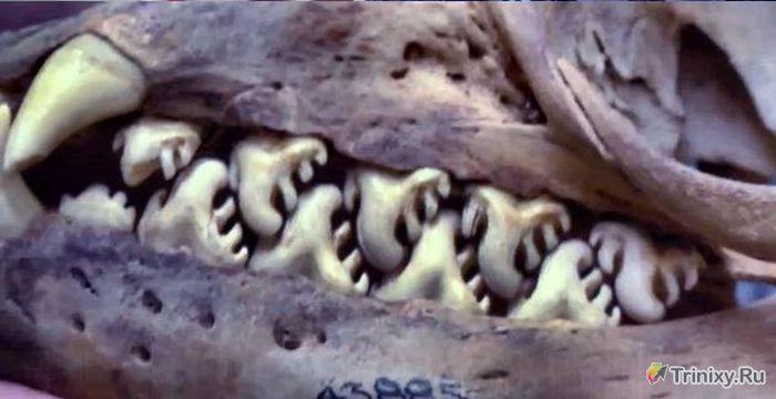 Загадка дня. Чей это череп? (4 фото)