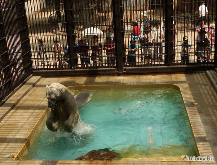 Как медведи спасаются от летней жары (8 фото)