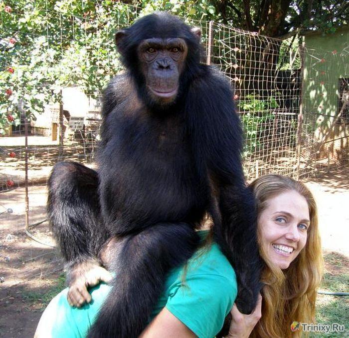 Gülen Hayvanlar (63 fotograf)