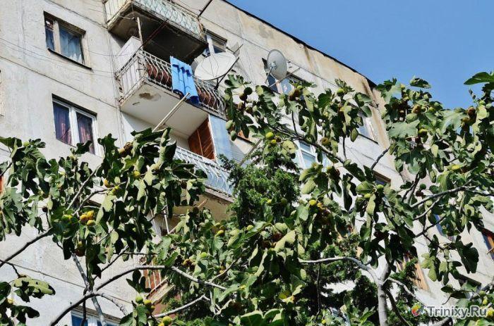 Съемная квартира в спальном районе Тбилиси (27 фото)