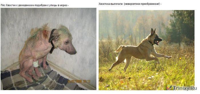 Трогательные перевоплощения бездомных животных (42 фото)