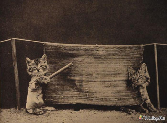 Удивительные ретро снимки животных (37 фото)