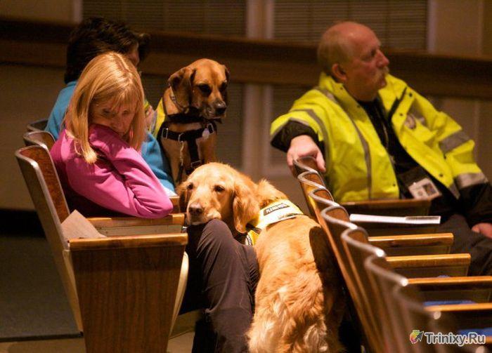 Животные, которые способны лечить людей (10 фото)