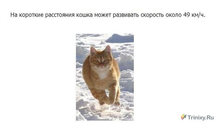 Познавательно о кошках (24 фото)