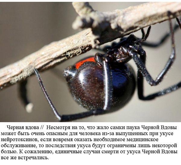 Самые опасные насекомые в мире (20 фото)