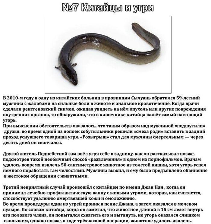 картинки паразитов в организме