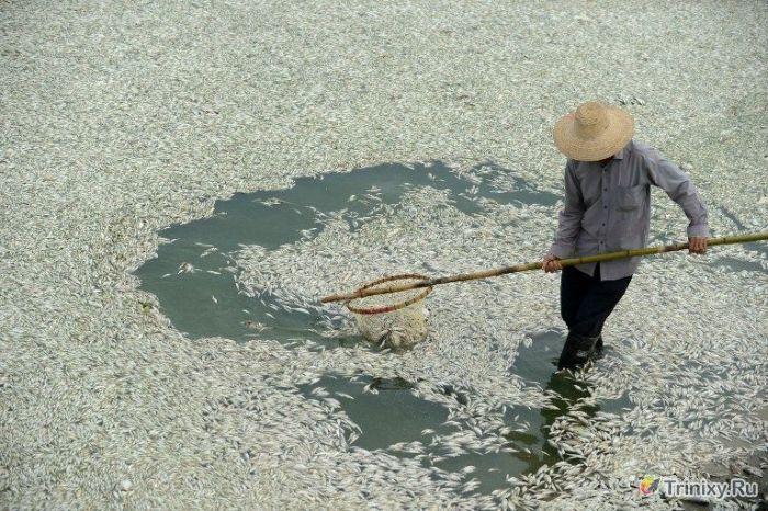 """Скоро на прилавках"" с приветом из Китая (9 фото)"