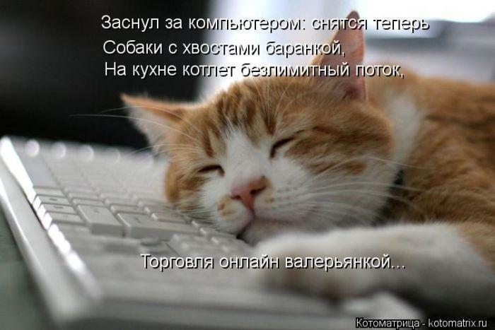 http://cdn.trinixy.ru/pics5/20130906/kotomatrix_47.jpg