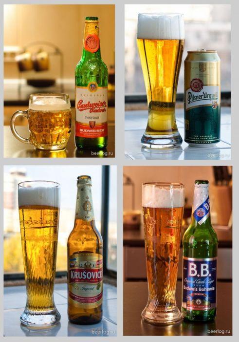 Типы и разновидности пива на любой вкус (34 фото)
