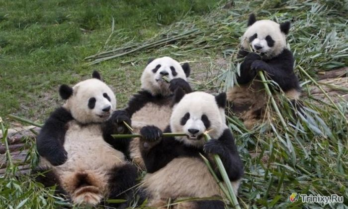 Милейшие создания на грани вымирания (5 фото)