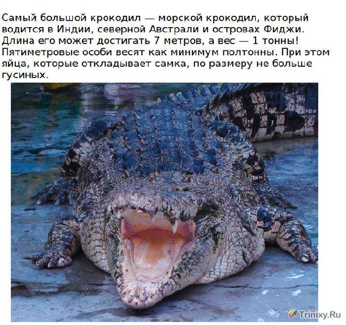 Кратко о крокодилах с картинками