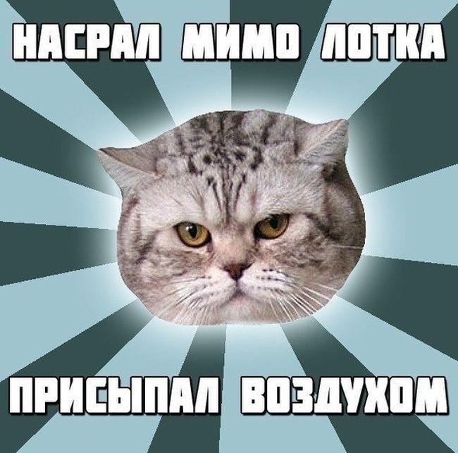 Фотки для мемов с надписями
