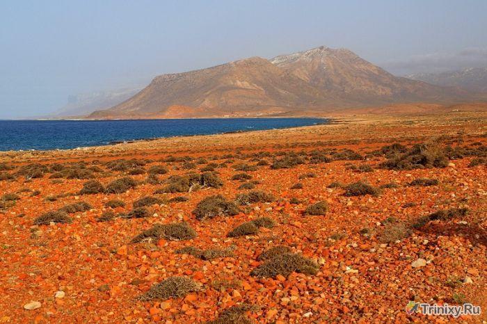 Удивительный остров Сокотра (35 фото)