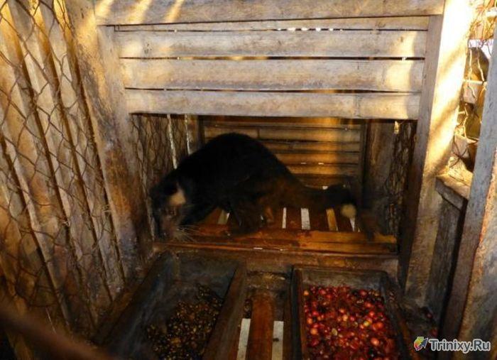В каких условиях живут необычные зверьки - мусанги (10 фото)