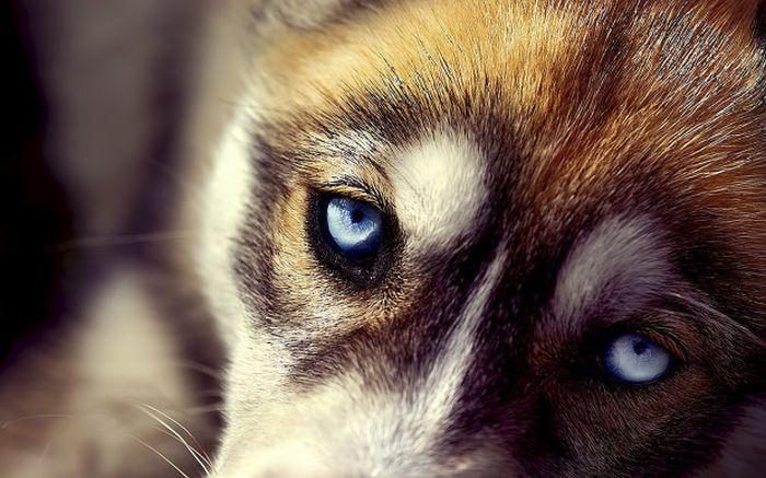 ТОП-5 невероятных способностей собак (5 фото)