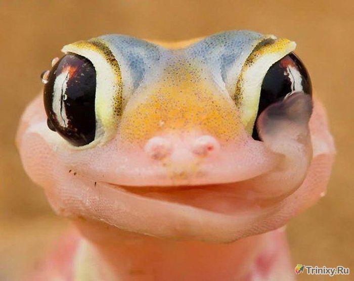 ТОП-10 невероятных способностей и умений животных (10 фото)