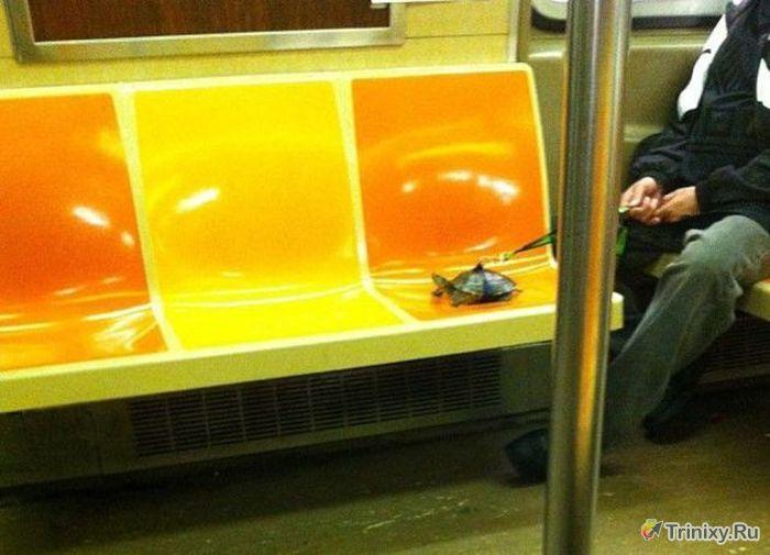 Фрики в общественном транспорте (54 фото)