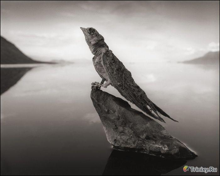 Озеро в Танзании, которое превращает животных в камень (7 фото)