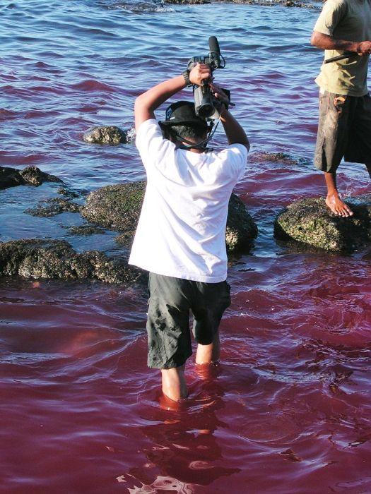 Жестокая охота на китов ради выживания (19 фото)