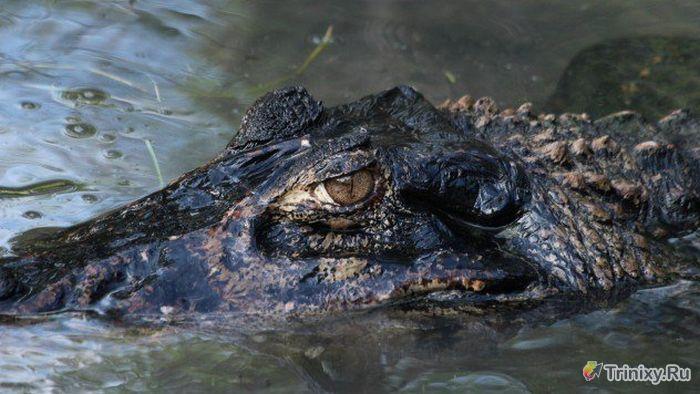 ТОП-10 самых жутких существ реки Амазонка (10 фото)