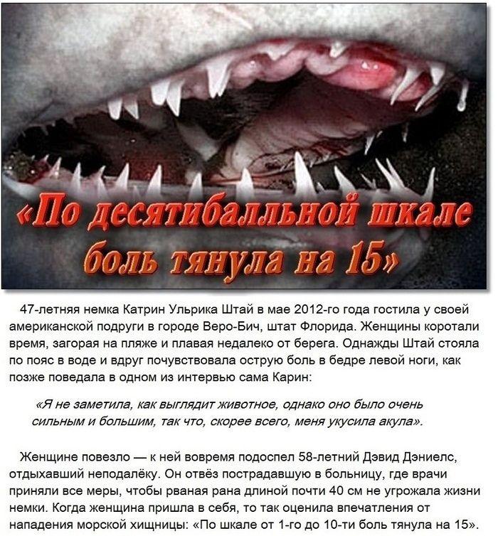 Ощущения при укусах смертоносных животных (8 фото)
