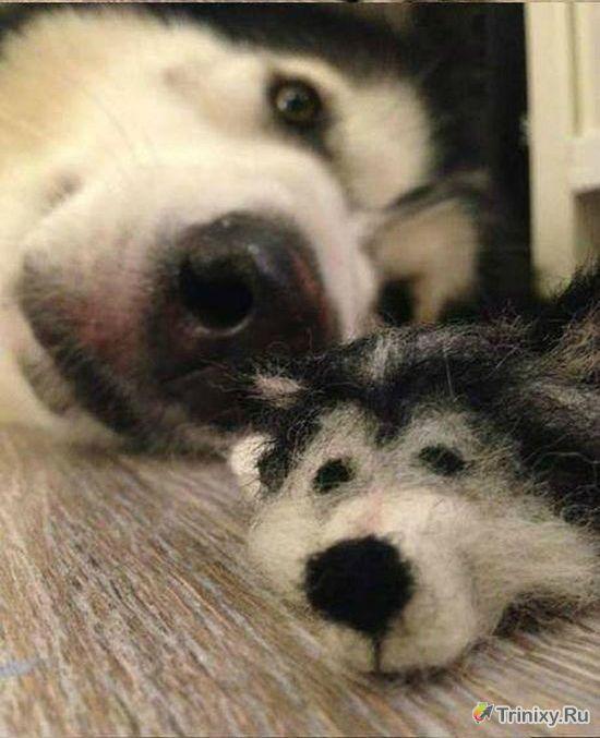Точная копия собаки Хаски (8 фото)