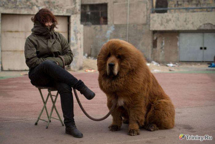Удивительные снимки мира животных (43 фото)