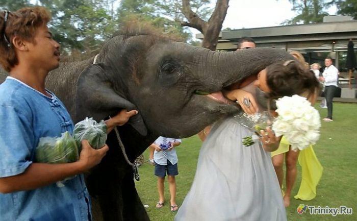 Свадебное фото со слоном пошло не по плану (7 фото)