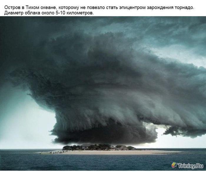Удивительная сила природы (14 фото)