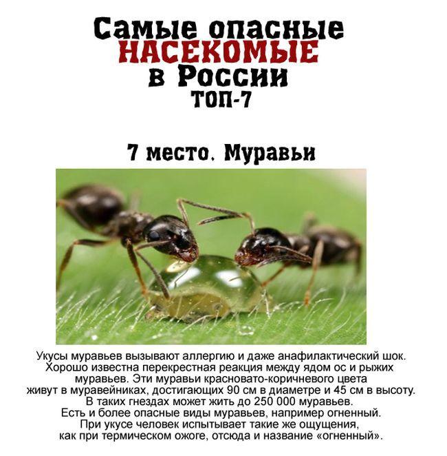 7 самых опасных насекомых России