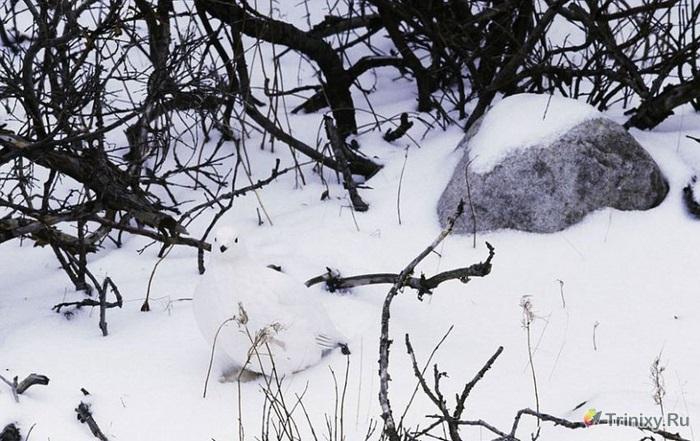 """Фотопроект """"Исчезновение"""" фотографа Арта Вульфа (16 фото)"""