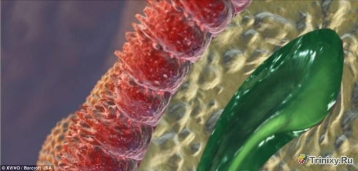 Человеческое тело при увеличении в 10 млн. раз (8 фото)