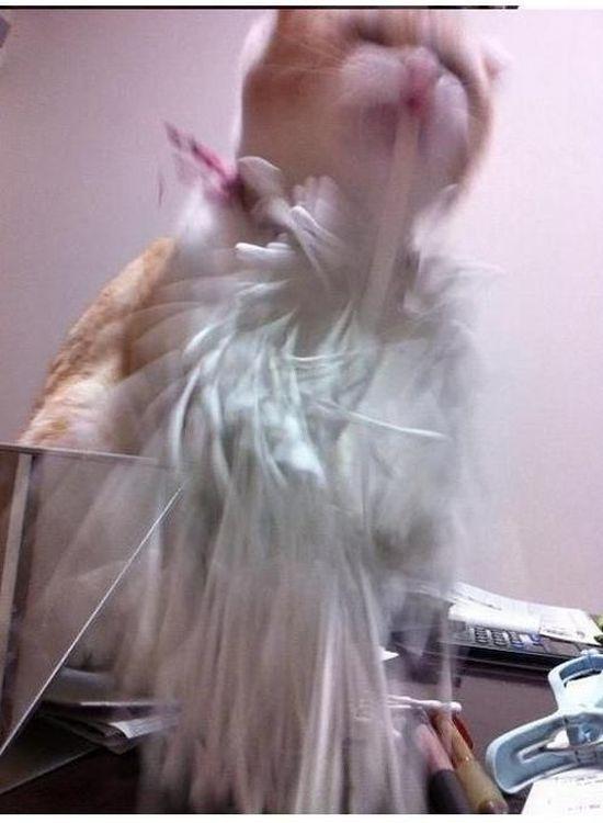 Обнаглевший кот-хулиган (5 фото)
