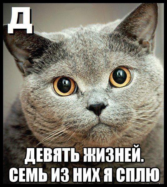 Алфавит по-кошачьи (10 картинок)