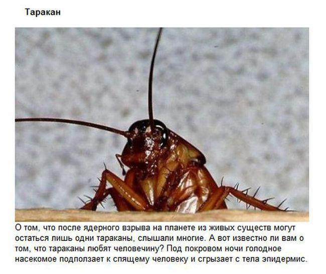 ТОП-5 самых отвратительных созданий (5 фото)