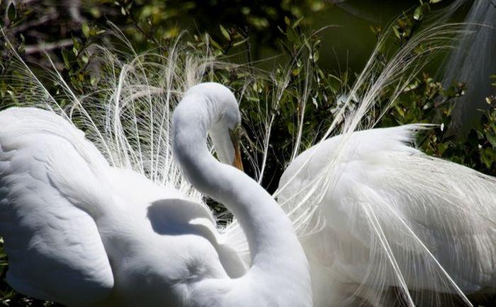 Удивительные снимки от National Geographic (50 фото)