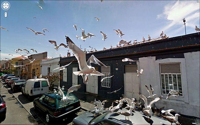 Google Stret Viev(24 Fotograf)